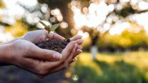 Mediu, de ce sunt plantele importante pentru tot ce ne înconjoară
